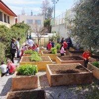 My School Garden